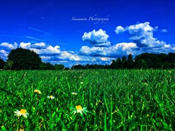 grassdark